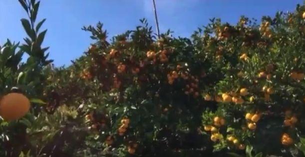 スプラウト・ファーマーズわかやまみかん~彩果園